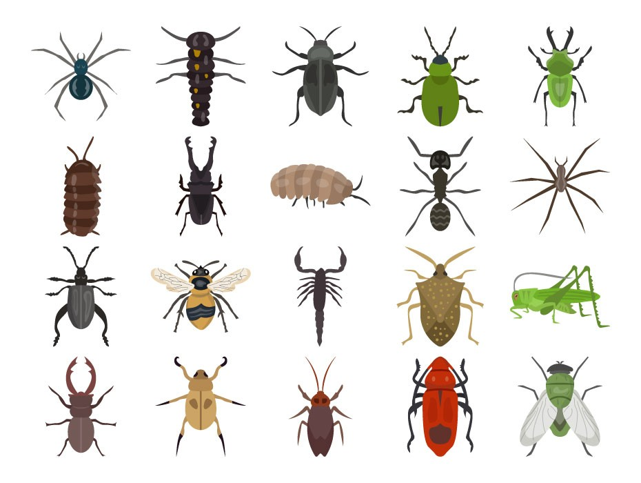 Insects Icon Free