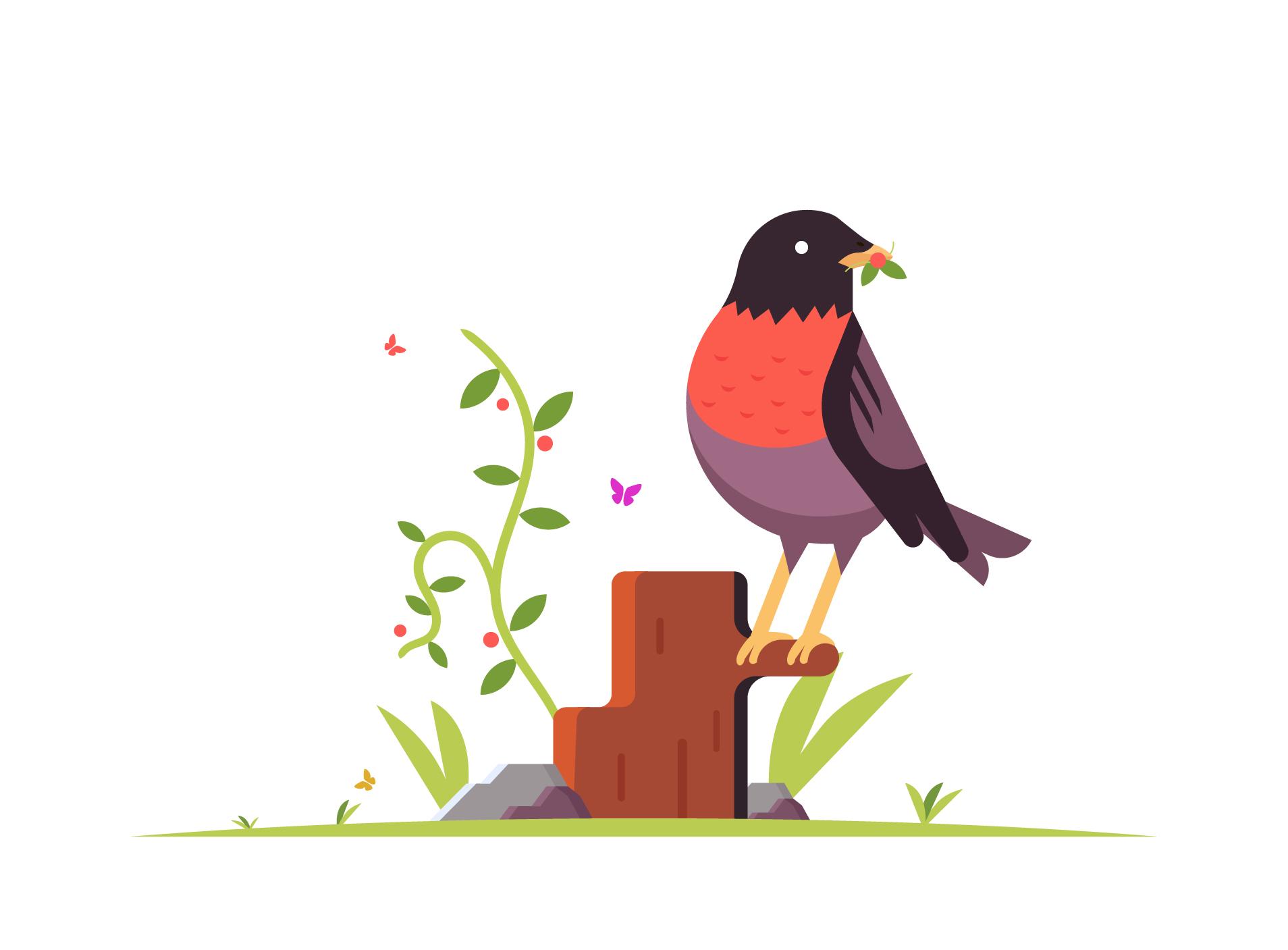 Robin Bird Illustration