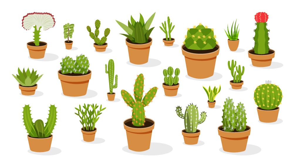 Cactus Free Vector Download