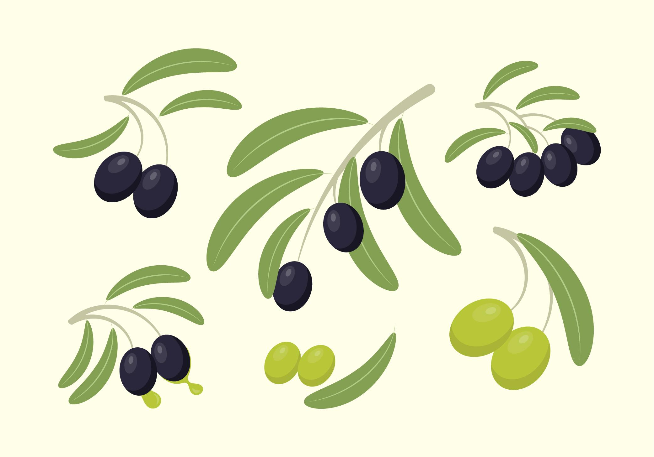 Free Olives Vector Art