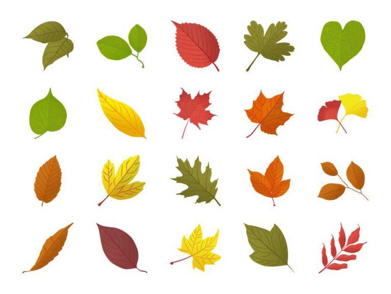 Autumn Leaves Vectors