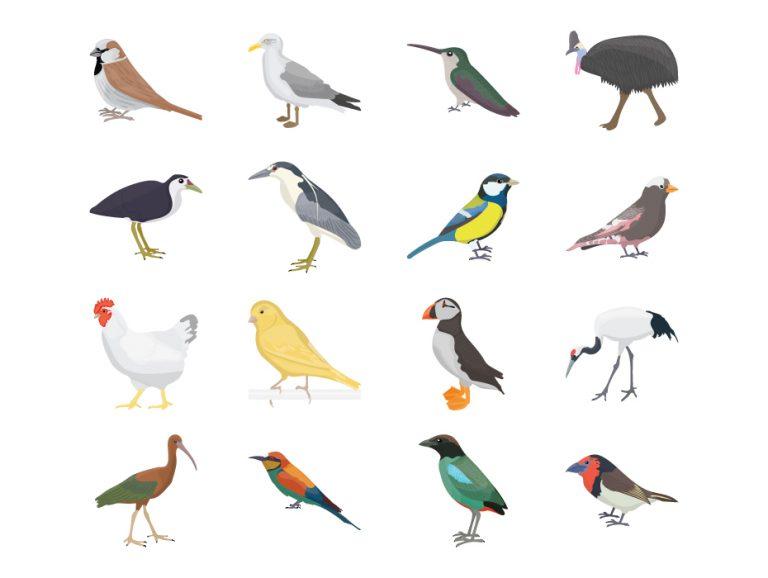 Birds Flat Vectors Free