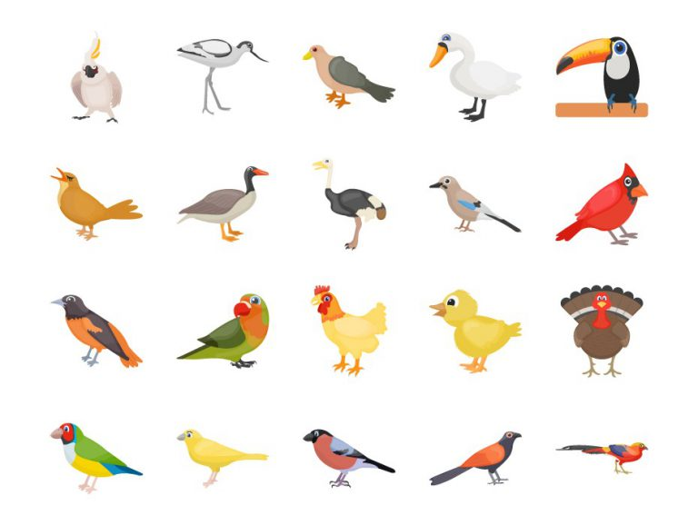 Cartoon Bird Drawing