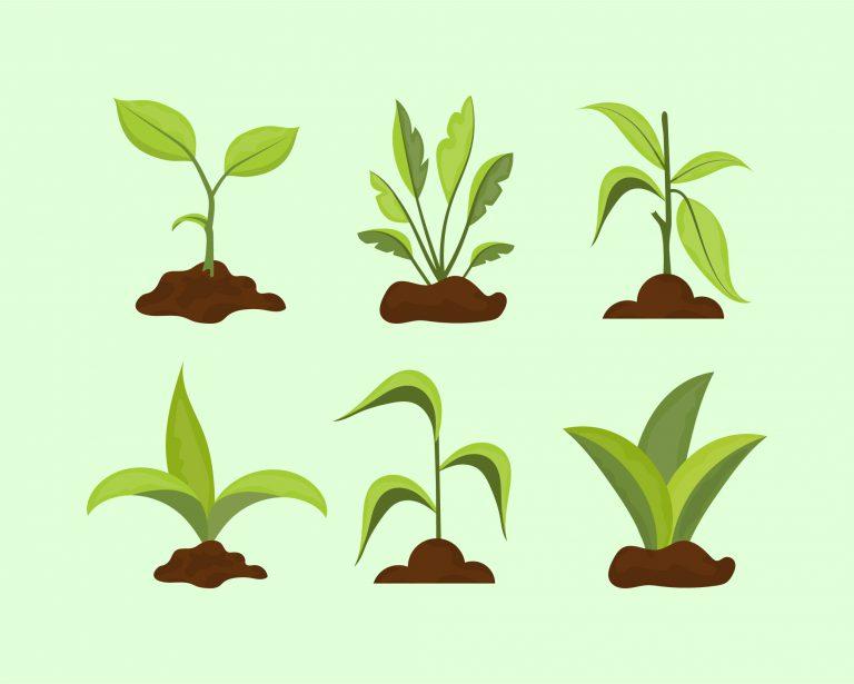 Sapling Plants Vector Download